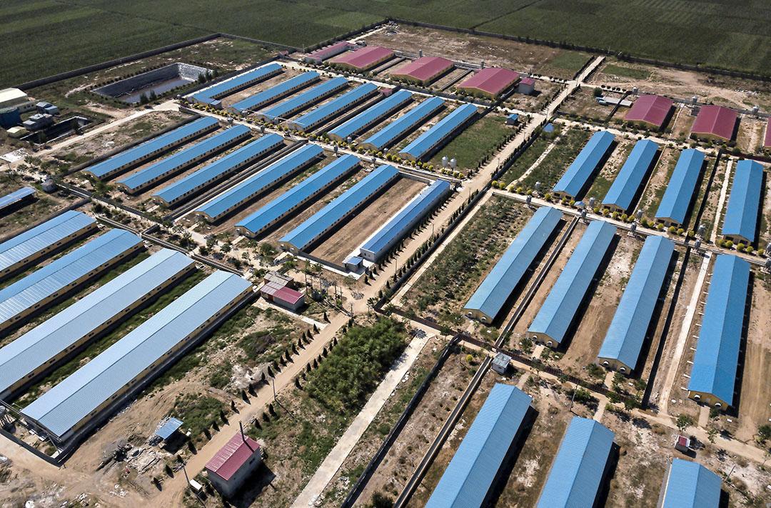 Varkensbedrijf in Hebei. China is snel aan het opschalen. - Foto: ANP - Foto: ANP