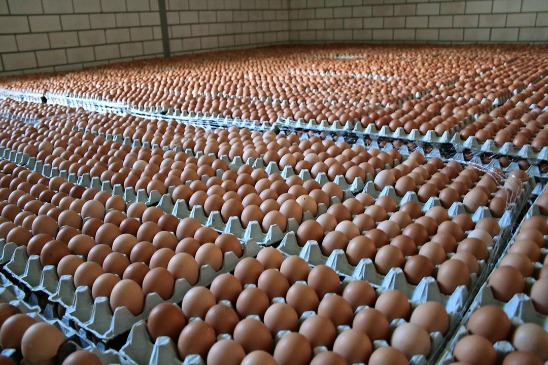 NOP wil dat eierhandelaren pluimveehouders een toeslag op de eieren geven zodat pluimveehouders kunnen investeren in milieumaatregelen. milieumaatregelen. - Foto: Hans Bijleveld