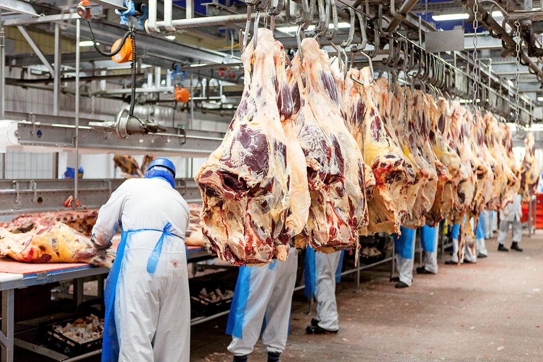 Slachterijen draaien op een lager pitje waardoor er minder vraag naar slachtkoeien is. - Foto: Boerderij