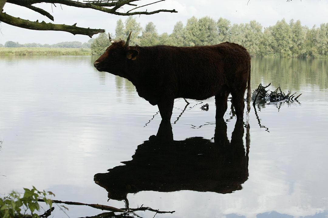Foto: Henk Riswick -