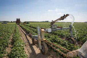 Beregenen van aardappelen. Beregenen kost gemiddeld €9 per millimeter. - Foto: Peter Roek