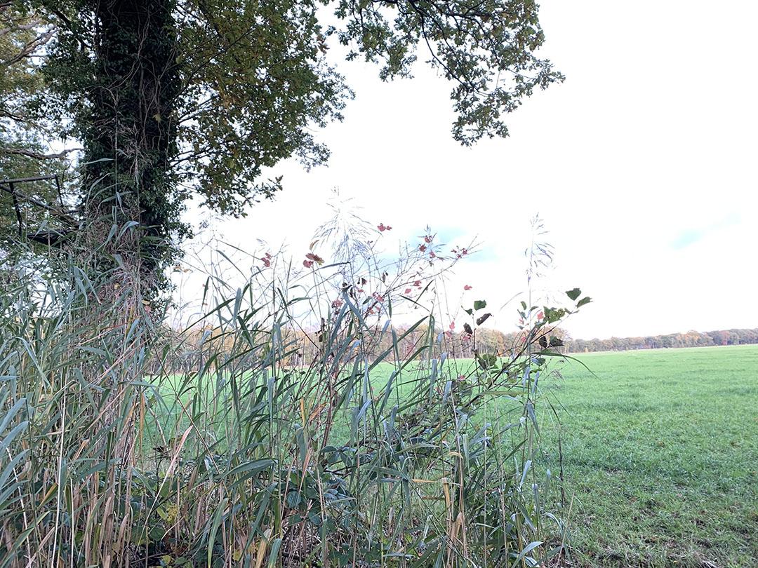 Natura 2000-gebied Lemselermaten. Provincie Overijssel wil dit gebied beschermen tegen stikstofuitstoot. - Foto: Boerderij -