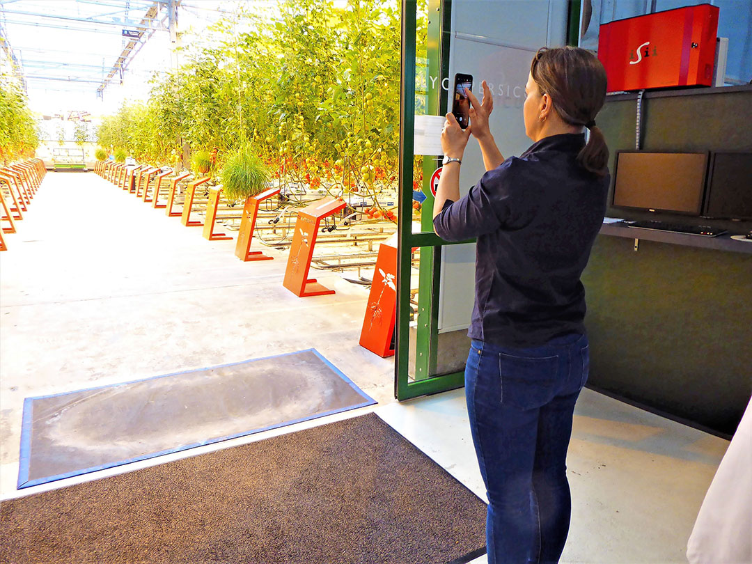 Helen Barnes van TomatoesNZ leert veel van de Nederlandse tomatensector
