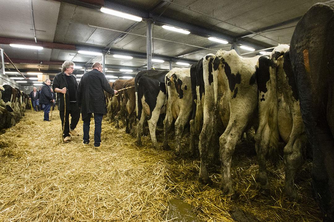 Archiefbeeld van de veemarkt in Leeuwarden. Het aanbod aan slachtkoeien is niet heel ruim, terwijl de dieren goed gevraagd zijn. - Foto: Anne van der Woude
