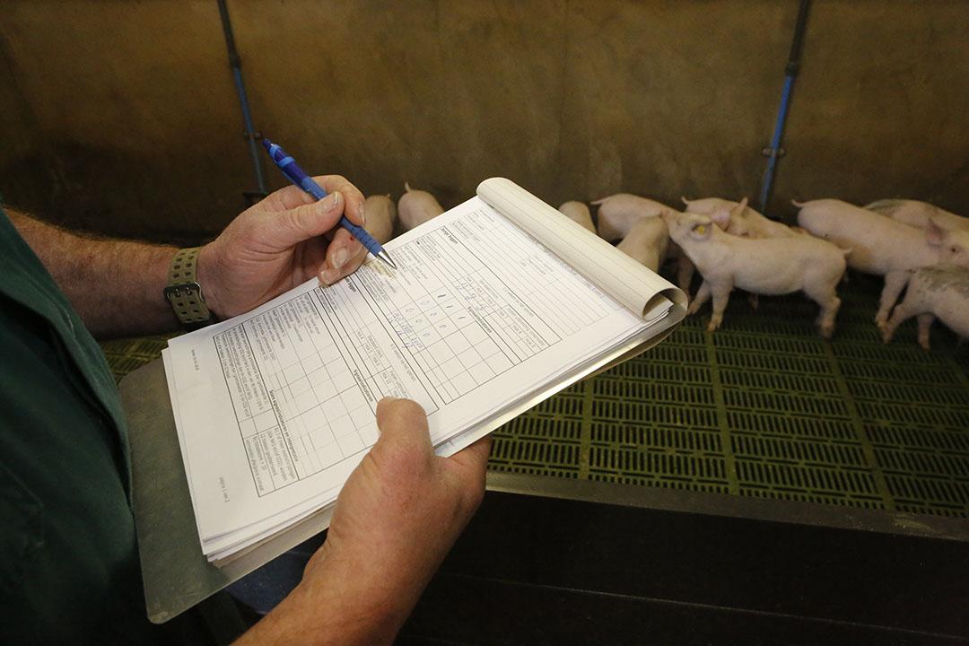Klimaatcontrole door de NVWA in een varkensstal. - Foto: Henk Riswick -