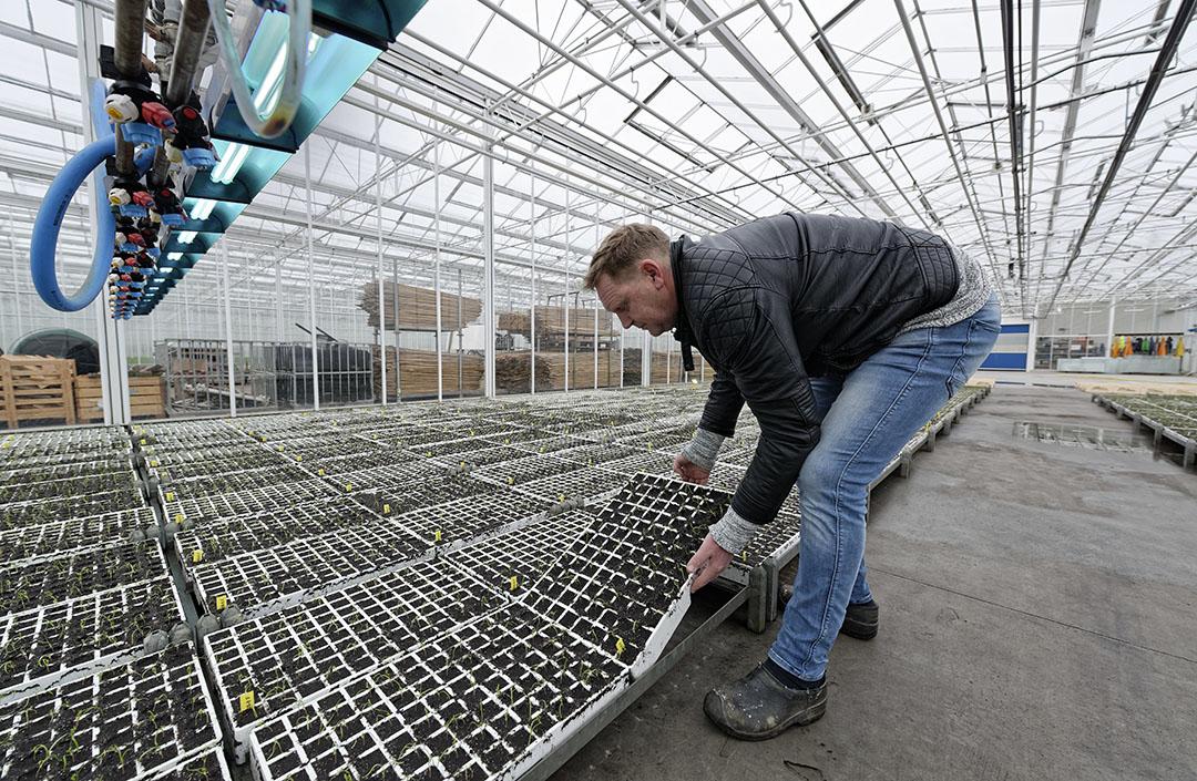 Opkweek van biologische planten bij Bejo. - Foto: Lex Salverda -