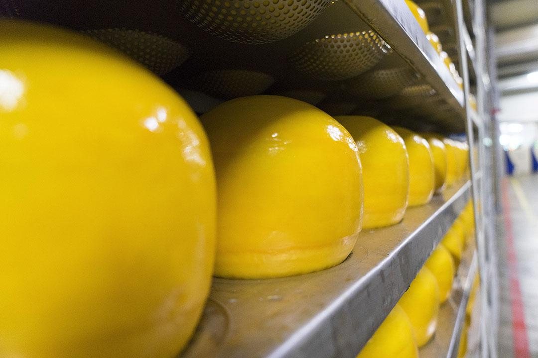 De opslag van kaas in een fabriek van FrieslandCampina. De kaasprijs zakt licht deze week. - Foto: Jan Willem van Vliet