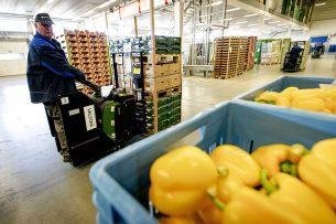 Kisten met groenten en fruit worden gereedgemaakt voor de export. - Foto: ANP