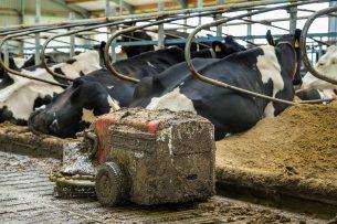 De fosfaatproductie van de melkveesector bedroeg in 2019 75,1 miljoen kilo. Dat is 3,6 miljoen (4,6%) kilo minder dan in 2018. - Foto: ANP