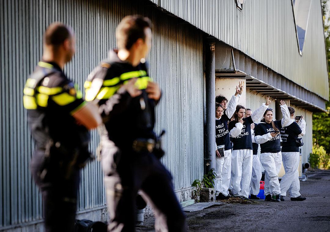 Meat the Victims-activisten tijdens een bezetting van een Nederlands varkensbedrijf, vorig jaar. - Foto: ANP