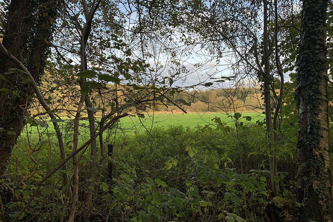 Natuurgebied Lemselermaten in Overijssel. - Foto: Misset