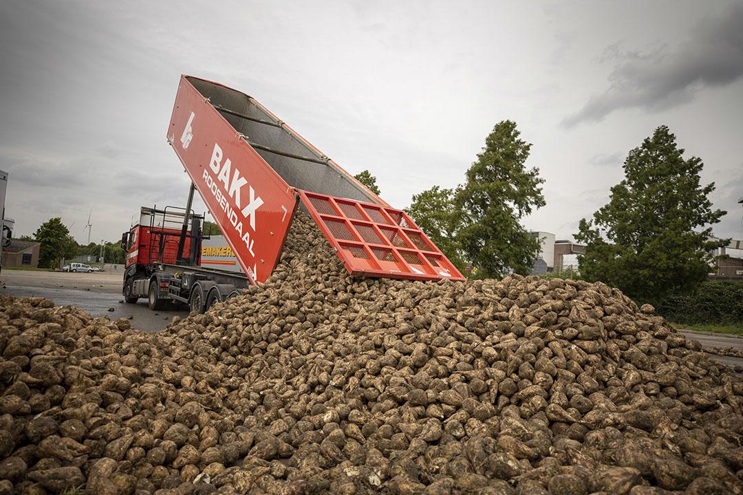 Aanleveren van suikerbieten bij Suikerunie in Dinteloord. - Foto: Roel Dijkstra