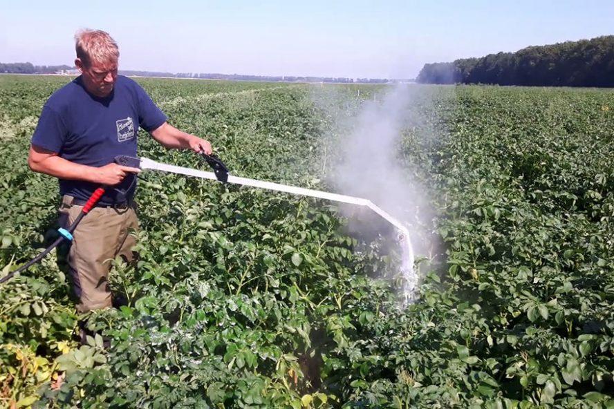 Toepassen van foamstream met hogedrukspuit. Kokendheet water met zeep brandt het blad kapot. - Foto: Delphy - Foto Delphy