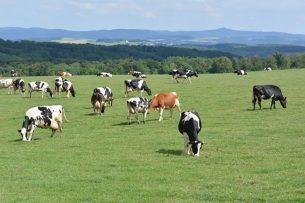 Koeien in deelstaat Noordrijn-Westfalen. - Foto: Canva -