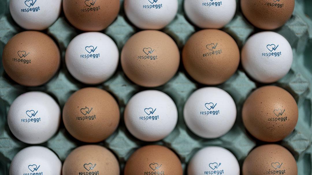 De 'haanloze' eieren krijgen een speciaal stempel Respeggt, dat garandeert dat voor de productie van deze eieren geen kuikens zijn gedood - Foto: Seleggt