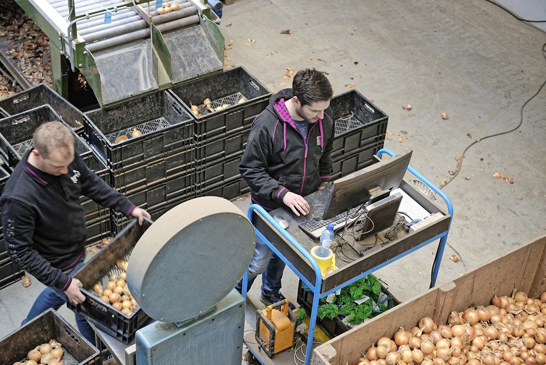 Medewerkers van De Groot en Slot beoordelen uienrassen uit het gehele land op kwaliteit. - Foto: Lex Salverda