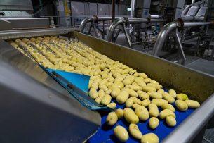 Aardappels worden verwerkt bij Aviko. De industrie verwerkt momenteel nog oude oogst. - Foto: jan Willem Schouten