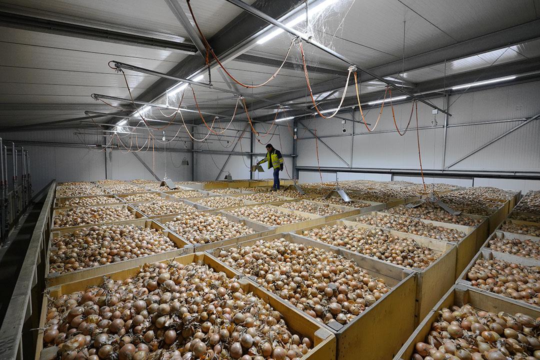 Van de laatste beschikbare tonnen goede kwaliteit uien is de afgelopen weken zo goed als alles richting de retail gegaan. - Foto: Ruud Ploeg