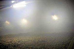 Het gassen van aardappelen. - Foto: Ton Kastermans