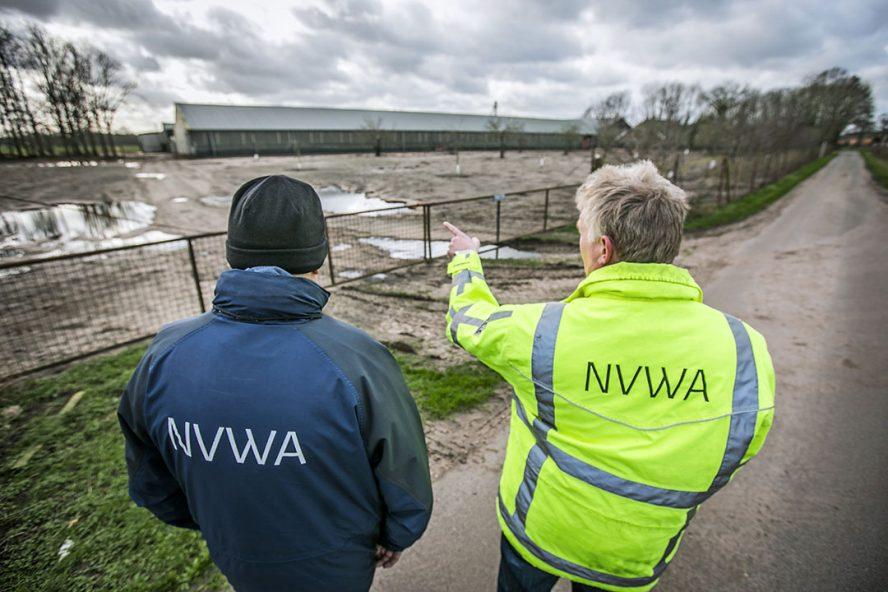 Medewerkers van de Nederlandse Voedsel- en Warenautoriteit (NVWA) controleren of pluimveebedrijven zich aan de ophokplicht houden. - Foto: ANP