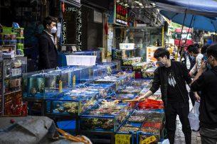 Mensen dragen uit angst voor het coronavirus mondkapjes op een vismarkt in Guangzhou (China). Foto: ANP