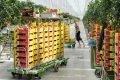 Agro Care kon zich vinden in een Nederlands investeringsbedrijf, dat voor de langere termijn wilde meedenken en meedoen in een groeistrategie. - Foto: Wick Natzijl