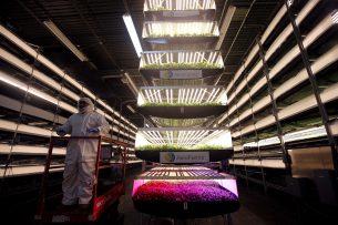 Vertical farming kan de toekomst van groente telen veranderen. - Foto: Reuters
