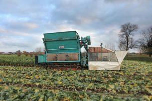 Oogst spruiten in West-Vlaanderen. - Foto: Fotostudio Atelier 68