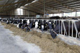 Sommige melkveehouders bouwden een grotere stal dan ze eerst van plan waren. Foto: Bert Jansen