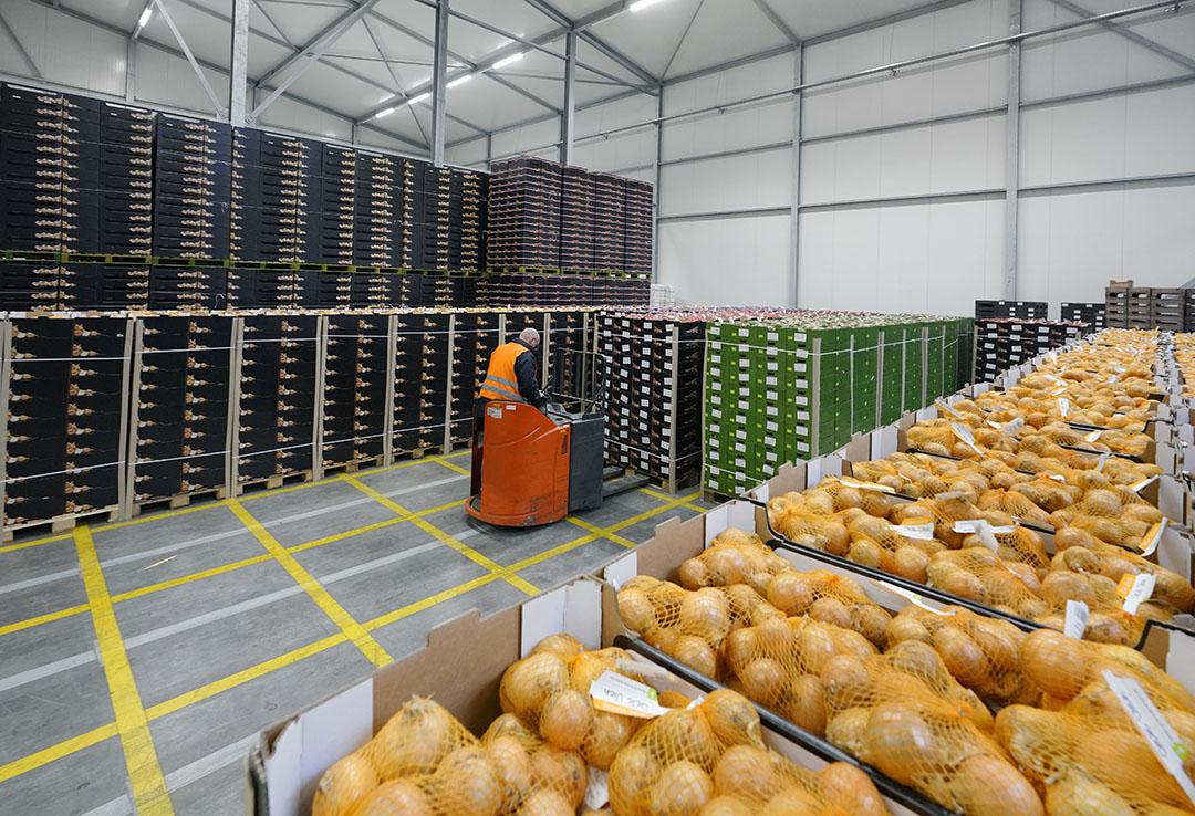 Verwerken van uien. De vraag naar uien is goed, waardoor er wekelijks grote volumes weggaan. - Foto: Ruud Ploeg