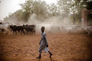 Planet Africa concludeert dat kinderen hand-en-spandiensten verlenen en dat ze helpen met het hoeden van de koeien. - Foto: ANP