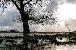 Hoogwater in de Noordwaard Polder in de Biesbosch. De natte natuur in de Biesbosch is niet erg stikstofgevoelig. - Foto: ANP