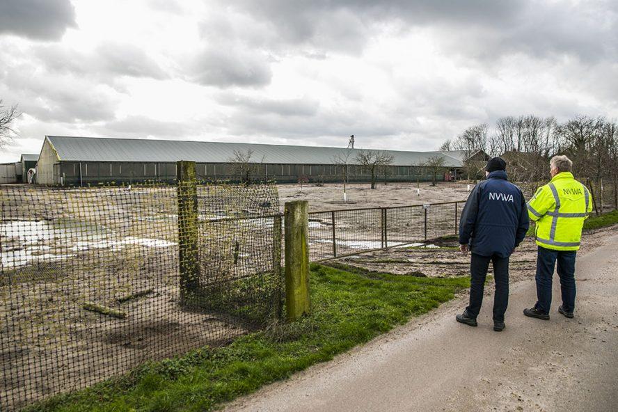 Nederlandse Voedsel- en Warenautoriteit (NVWA) controleert bedrijven op ophokplicht. - Foto: ANP