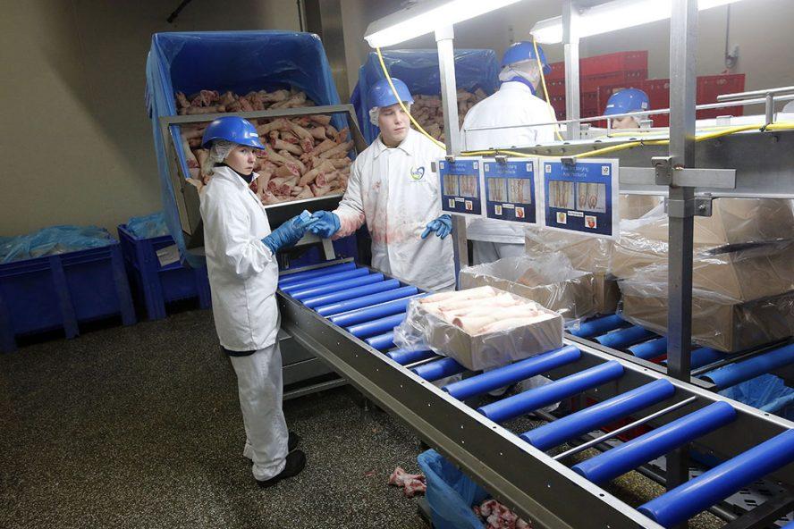Het inpakken en laden van varkensvlees voor export. - Foto: Bert Jansen