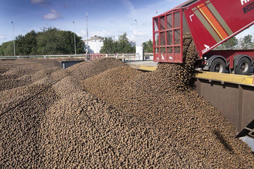 Levering zetmeelaardappelen bij Avebe in Ter Apelkanaal. - Foto: Mark Pasveer