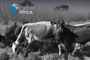 Cover van het onderzoeksrapport van Partner Africa. - Foto: Partner Africa