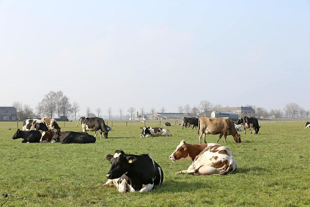 Om natuur te ontlasten, moet in de omgeving daarvan de emissie sterk omlaag, zegt Frits van der Schans. Dat kan door bijvoorbeeld koeien langer te laten weiden. - Foto: Henk Riswick