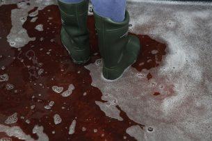 Niet alle Duitse varkenshouders gaan standaard met schoon schoeisel de stal in. - Foto: Henk Riswick