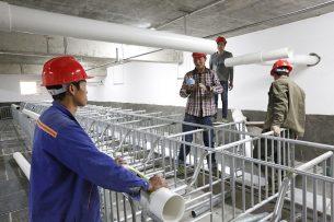 De inrichting van een nieuwe varkensstal in China. - Foto: Henk Riswick