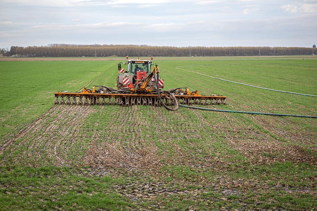 Drijfmest uitrijden op wintertarwe. - Foto: Peter Roek