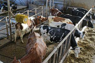 KoeMonitor is in maart 2019 door ZuivelNL gepresenteerd als het nieuwe toezichts- en controlesysteem voor de melkveehouderij. Foto: Lex Salverda