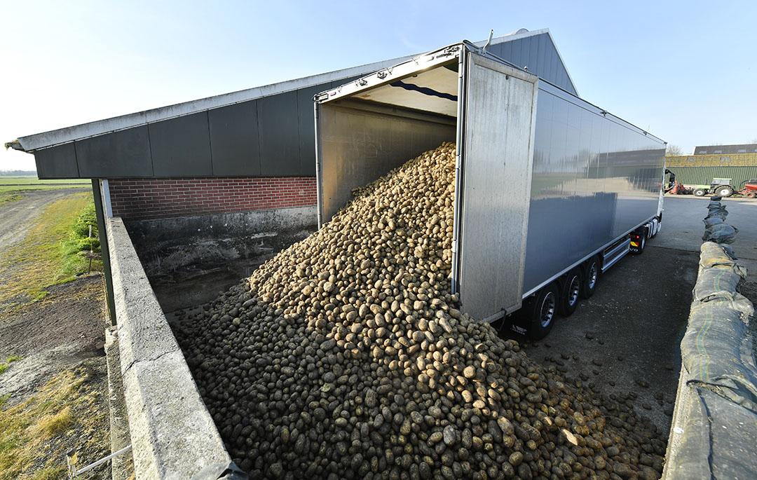 Voeraardapelen worden geleverd op een melkveebedrijf. Het aanbod voeraardappelen loopt momenteel hard terug. - Foto: Cor Salverius
