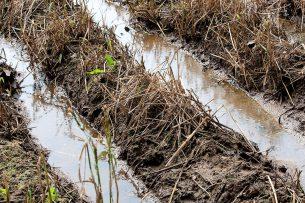 Waterschade in aardappelruggen. - Foto: Ronald Hissink