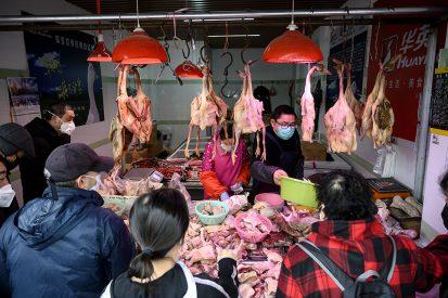'In China is een hele bedrijfstak ontstaan rondom exotische dieren voor consumptie. Die dieren worden verkocht op markten en daar komen ze in contact met pluimvee en varkens van veebedrijven die daar ook verhandeld worden