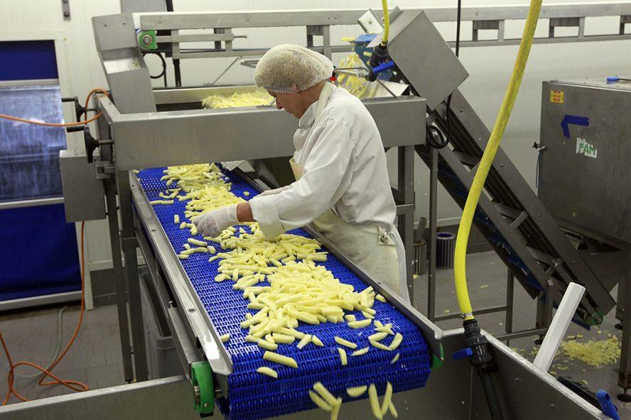 Akkerbouwbedrijf dat zelf frites snijdt van de fritesaardappelen. De coronacrisis raakt ook de (frites)aardappelmarkt én -keten hard. - Foto: Bert Jansen