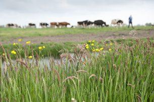 Oud en kruidenrijk grasland is een belangrijk punt in het nieuwe Albert Heijn-programma.