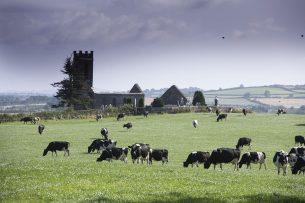Ierse rundvleessector