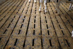 Terwijl 145.000 kalveren hadden kunnen beschikken over een zachtere vloer, zijn in de praktijk slechts voor 17.000 kalveren betere vloeren gelegd, constateert Wakker Dier. Foto: Hans Prinsen