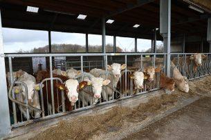 Vleesveebedrijf in Duitsland. Foto: Henk Riswick