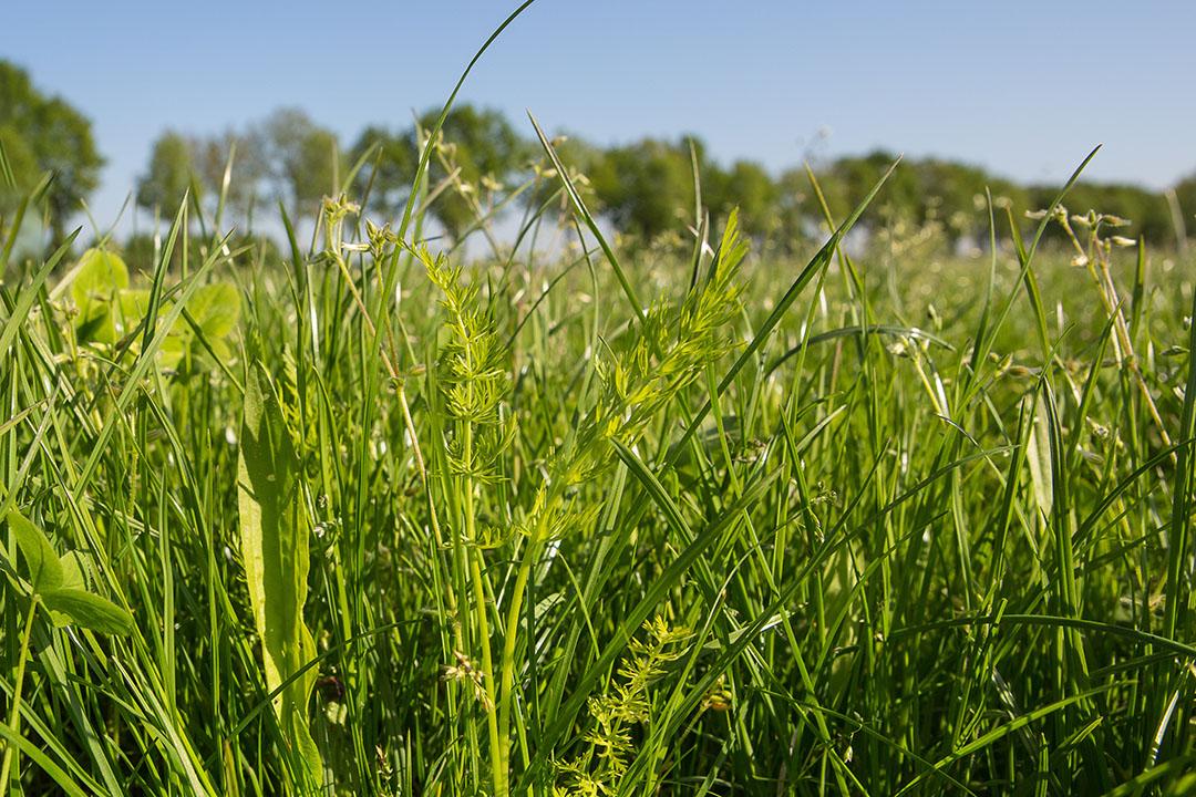 Kruidenrijk grasland. Foto: Peter Roek